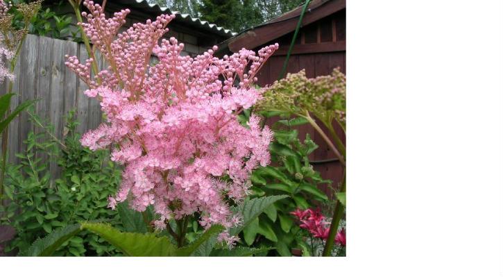 Цветы цветущие все лето с фото